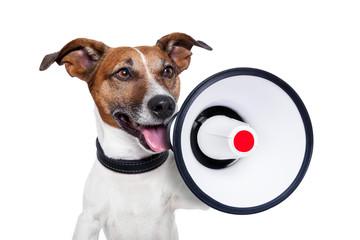 dog megaphone