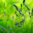 Knäuelgras - Nachhaltigkeit