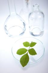 Ecology laboratory, experiment