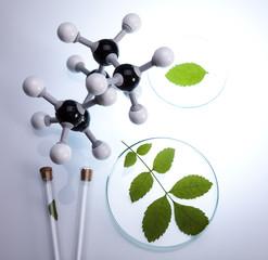 Laboratory glassware containing plants