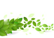 Branch with fresh green leaves. Vector illustration