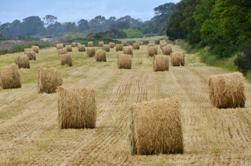 hay piles in the country