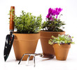 Gardening concept, work tools, plants