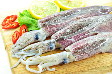 Fresh raw calamari