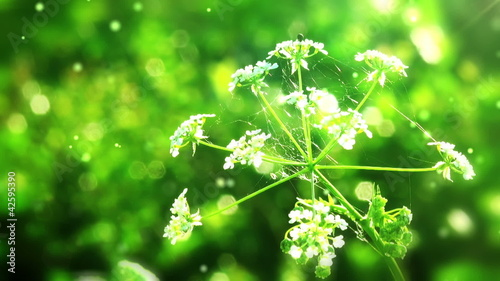 Flower on green folliage background