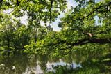 Branche basse au bord de l'étang.