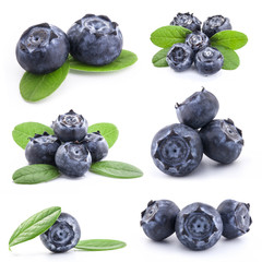 Collection of Blueberries isolated on white background