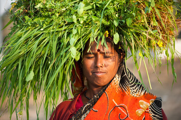 Indian villager woman carrying green grass