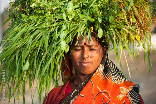 Indian villager woman carrying green grass