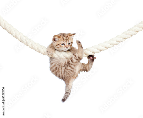 little cat clutching at rope isolated on white background - 42602154