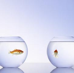 Goldfische in 2 Gläsern