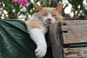 Relax felino