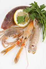 mix of fresh fish
