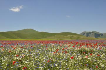 Campo fiorito 2012