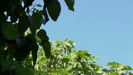 rami foglie