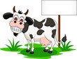 funny cow cartoon with blank sign