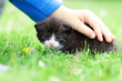 Newborn kitten in a child hand on grass