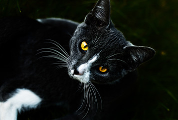 house cat's eye