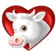 vitello cuore