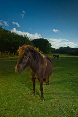 Brown horse in evening light