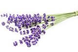 Fototapety Lavendelbund auf weißem Hintergrund