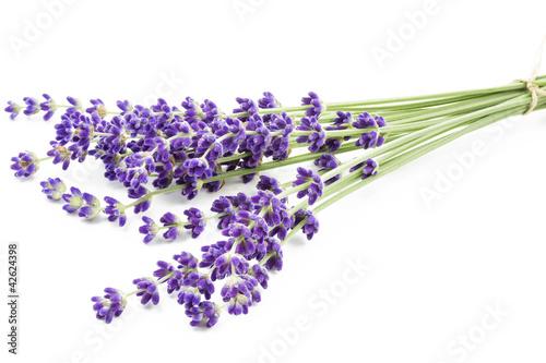 Staande foto Lavendel Lavendelbund auf weißem Hintergrund