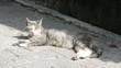 Dösende Katze