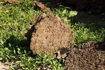 dung for heating furnace