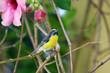 Fototapeta Tropikalny - Karaiby - Ptak