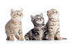 three little cats kittens looking up isolated on white backgroun