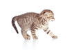 side view of funny young cat kitten isolated