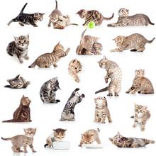 Sammlung von lustigen verspielte Katze Kätzchen auf weißem backgro isoliert