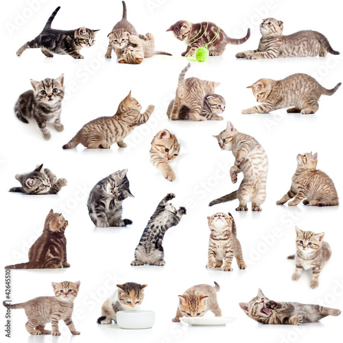 collection of funny playful cat kitten isolated on white backgro