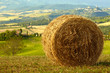 golden hayfield in a bright blue sky in  tuscany