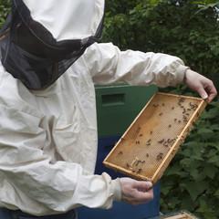Imker mit Bienen