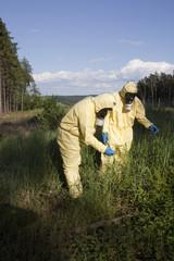 Experten untersuchen tote Bäume
