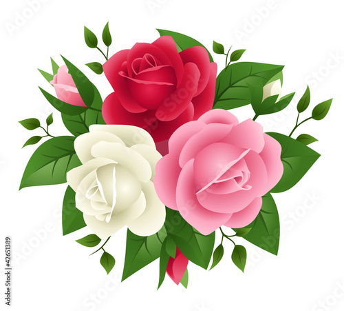Vector illustration of red, pink and white roses