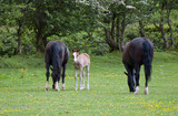 Foal and proud parents