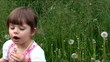 dziewczynka z dmuchawcami