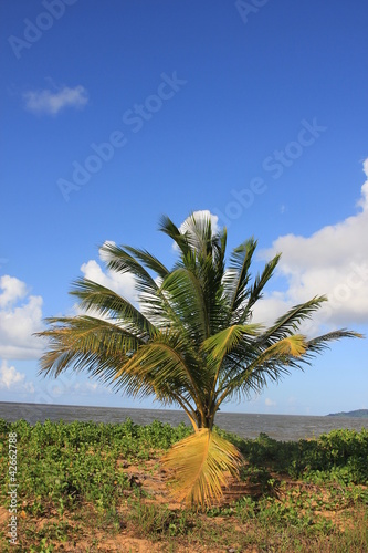 Guyane - Les Salines