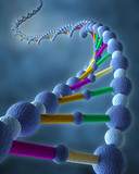 DNA in blue background
