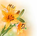 Fototapety Lily flowers border