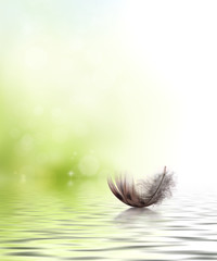 Feather drifting on water background