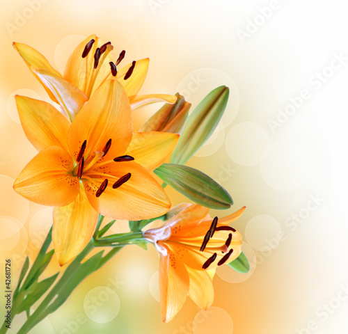 Lily flowers border