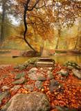 Fototapety fall creek