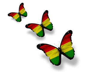 Three Bolivian flag butterflies, isolated on white