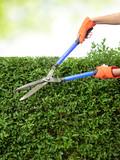 Cutting hedge