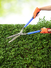 Cutting hedge