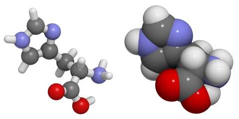 Histidine (His, H) molecule