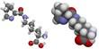 Pyrrolysine (Pyl, O) molecule.